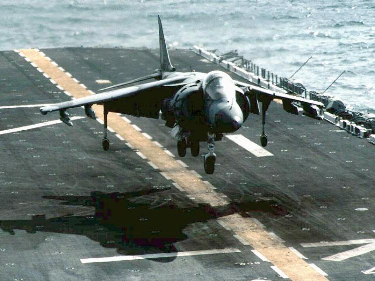 harrier-swa
